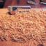 handmade pasta passatelli